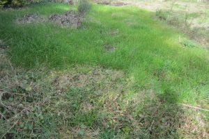 Ref Y 130 precioso terreno en Santa Ana